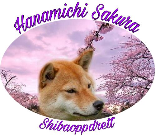 Kennel Hanamichi Sakura